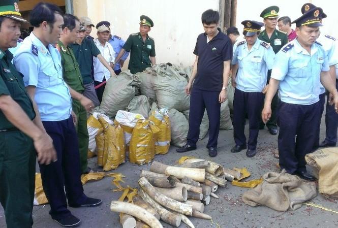 Lực lượng chức năng khám xét số ngà voi, vảy tê tê phát hiện được.