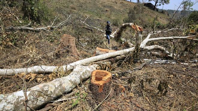 Hiện trường một vụ phá rừng xảy ra tại Lâm Hà