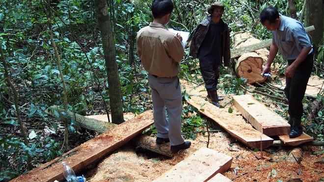 Kiểm tra hiện trường một vụ xẻ thịt cây rừng ở Lâm Đồng