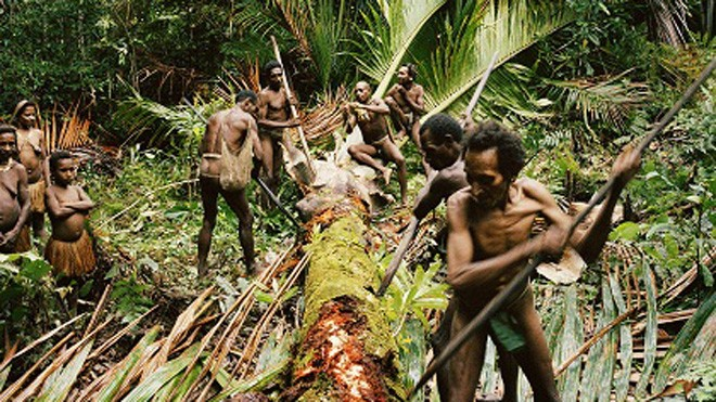 Bộ tộc nào ở Indonesia từng có tục săn đầu người và ăn thịt người?