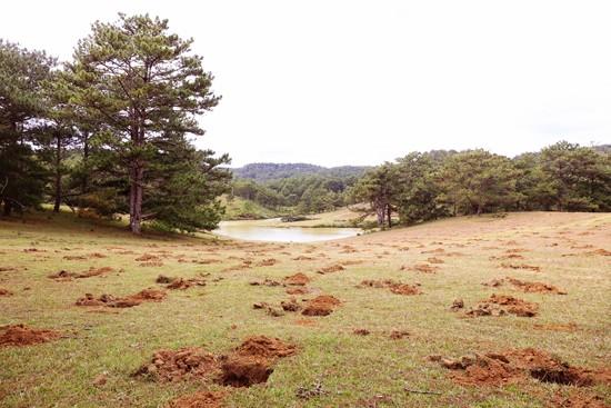 Đồi cỏ hồng ven hồ Suối Vàng bị đào xới nham nhở
