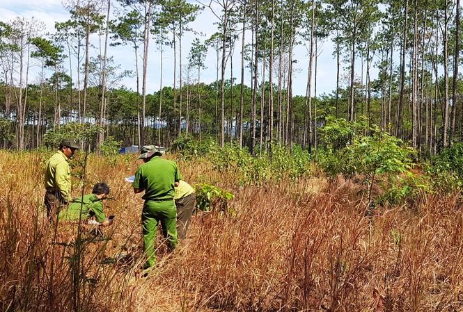 Lực lượng chức năng kiểm tra hiện trạng rừng