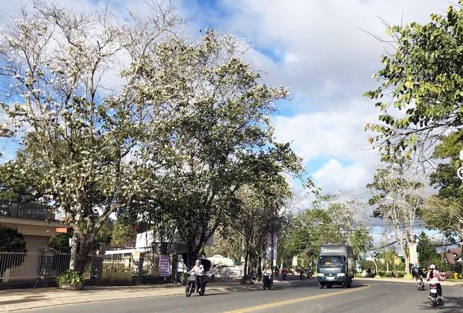 Hoa nở rộ trên đường Trần Phú