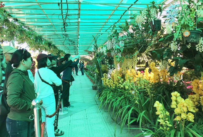 Đông đảo du khách tham quan khu vực triển lãm hoa lan
