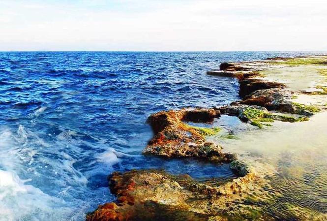 Rêu phủ trên rạn san hô cổ ở Hòn Đỏ