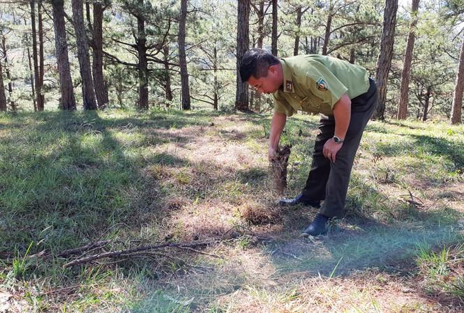 Kiểm lâm tìm dấu vết cây rừng bị cưa hạ, phi tang
