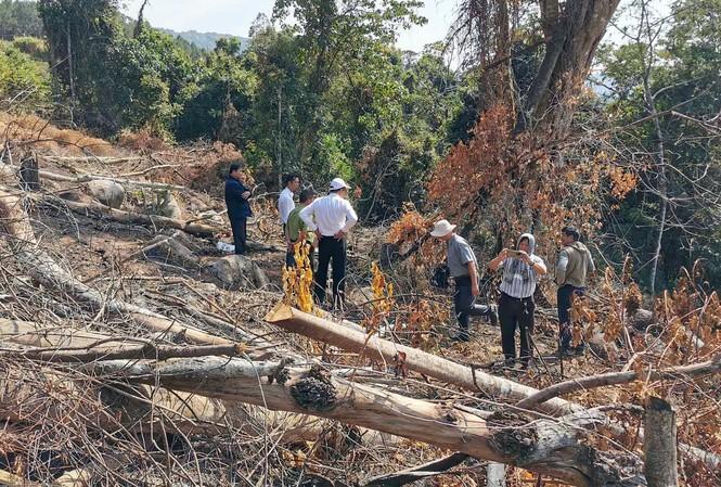 Hiện trường vụ phá rừng tại tiểu khu 158B