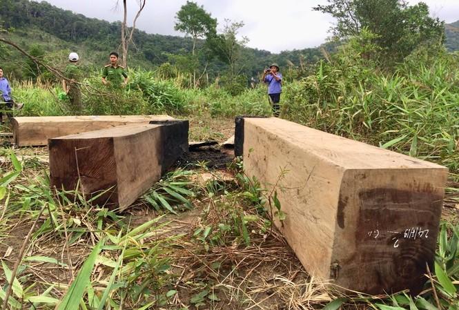 Một vụ khai thác lâm sản trái phép trên địa bàn xã Ia Tul, huyện Ia Pa