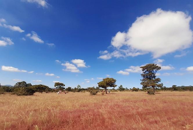 Dự án sân golf Đắk Đoa sẽ giữ nguyên 8 ha đồi cỏ hồng nổi tiếng lâu nay