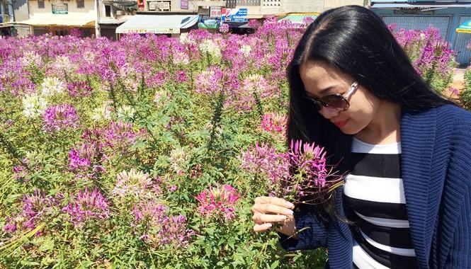 Chụp ảnh lưu niệm với hoa hồng ri ở công viên Ánh Sáng.