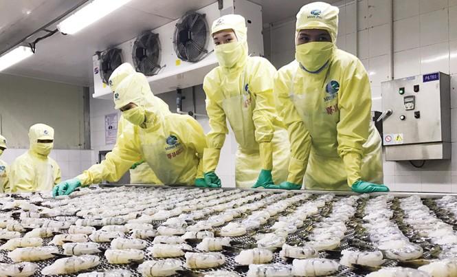 Bộ trưởng Nguyễn Xuân Cường yêu cầu ráo riết thanh kiểm tra, xử lý việc sử dụng kháng sinh, bơm tạp chất vào tôm. Ảnh: Bình Phương.