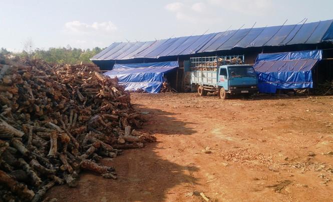 Cán bộ địa chính xã Đliê Ya không biết lò than xây dựng trên đất nông lâm nghiệp.