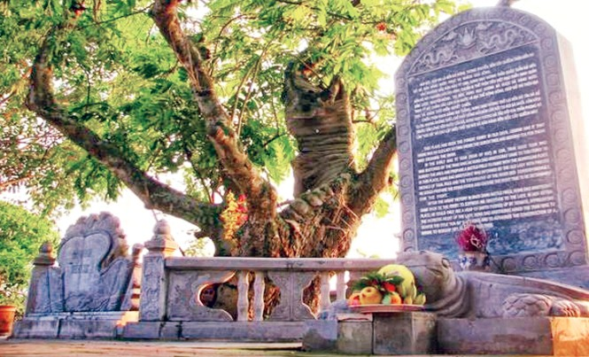 Cây quếch cổ thụ gần nghìn năm tuổi vẫn toả bóng mát cho đến ngày nay.