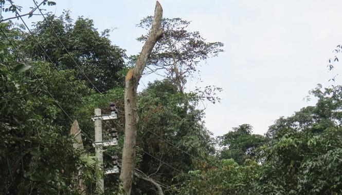 90 ha rừng đặc dụng Phong Nha - Kẻ Bàng được cho là bị xâm hại khi kéo điện lưới