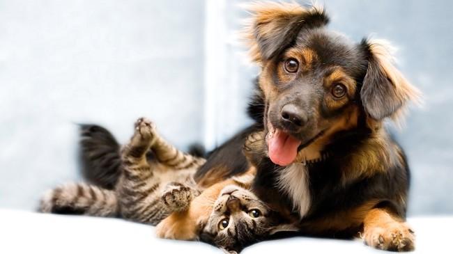 """Thị trấn Trigueros del Valle của Tây Ban Nha vừa công nhận chó và mèo là """"công dân không phải người"""". Ảnh: EFE"""