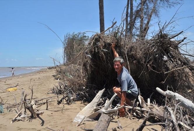 Sạt lở ở ven biển Trà Vinh. Ảnh: Hòa Hội.