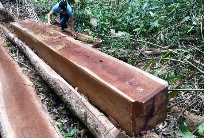 Nhiều lóng gỗ còn lại tại hiện trường