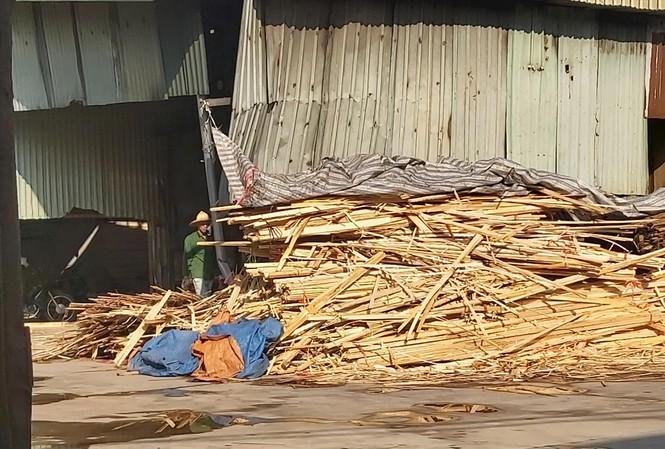 Nguyên vật liệu được tập kết về để sản xuất gỗ ép