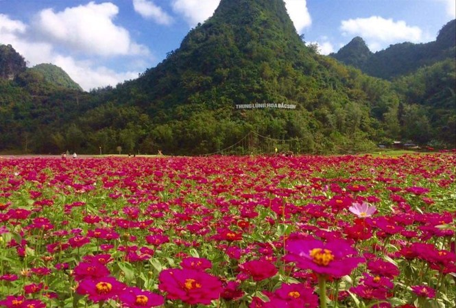 Thung lũng hoa Bắc Sơn thu hút rất đông du khách một thời Ảnh: Thế Vinh