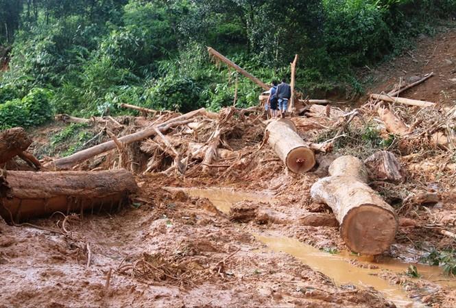 Những thân gỗ ngổn ngang sau vụ sạt lở. Ảnh: Cảnh Huệ