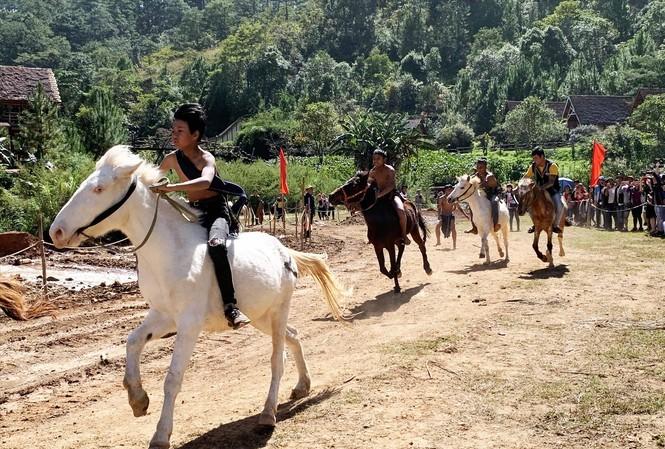 Ngựa không yên tung vó trên cao nguyên