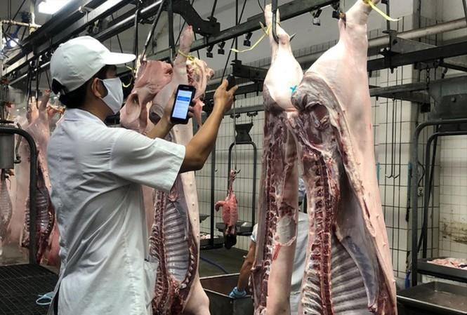Nguồn thịt lợn cung cấp ra thị trường hiện nay chủ yếu từ các công ty chăn nuôi lớn