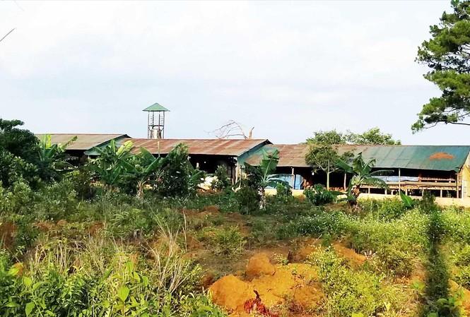 Phá rừng lập trang trại rộng cả chục héc ta