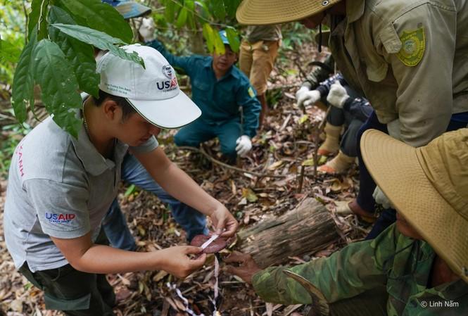 Khi cây đẳng sâm được trồng và khai thác hợp lý, đời sống của người dân ở xã Gary (huyện Tây Giang, tỉnh Quảng Nam) được cải thiện rõ rệt. Ảnh: Giang Thanh