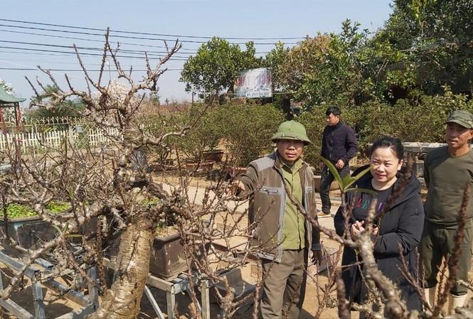 Một số khách hàng đến đặt thuê đào Thất Thốn của nghệ nhân Lê Hàm. Ảnh: Võ Hóa