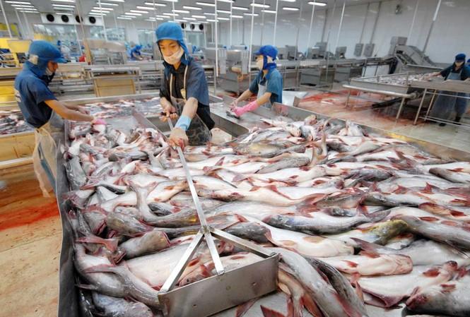 Doanh nghiệp chế biến cá xuất khẩu ở An Giang. Ảnh: hồng vĩnh
