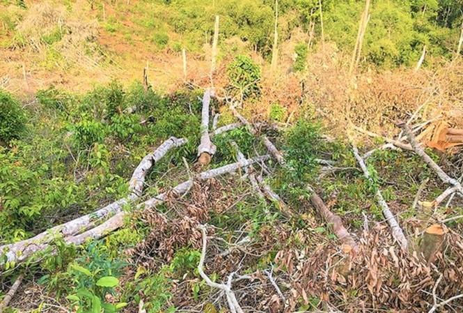 Một vụ phá rừng tại Đắk Nông