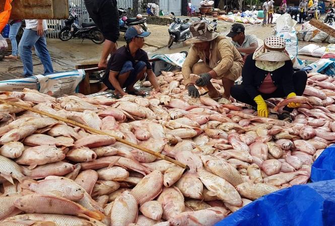 Cá nuôi bè tại xã Thanh Sơn (Định Quán) chết hàng loạt do nước lũ