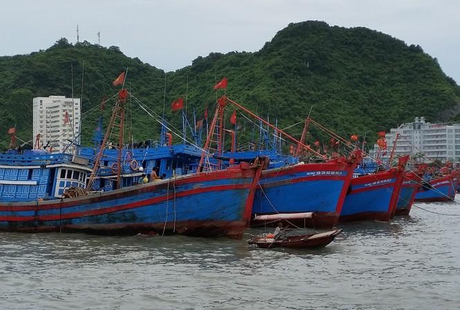 Nhiều tàu cá đã chủ động trú tránh để ứng phó với bão số 6 dự báo sẽ ảnh hưởng trực tiếp đến các tỉnh Nam Trung bộ trong thời gian tới  Ảnh: Bình Phương