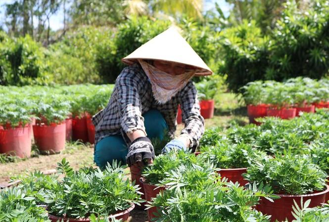 Bà Nguyễn Hoàng Yến đang chăm sóc hoa                      ẢNH: KIM HÀ