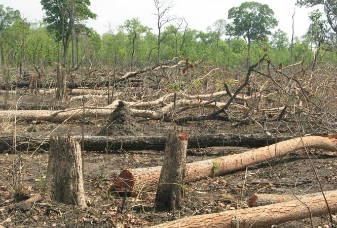 Rừng Tây Nguyên bị tàn phá  Ảnh: hồng v ĩnh