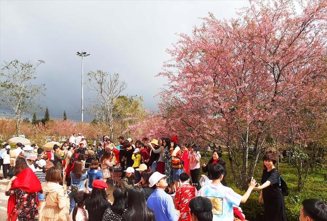Hàng nghìn người đổ về Măng Đen ngắm mai anh đào