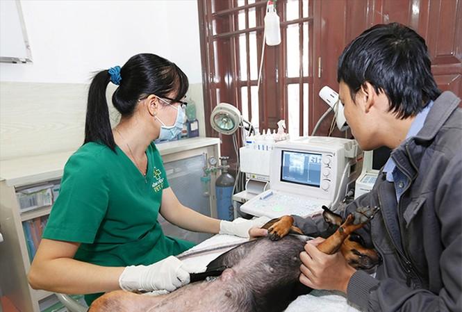 Khám chữa bệnh cho thú cưng tại bệnh viện thú y PetCare