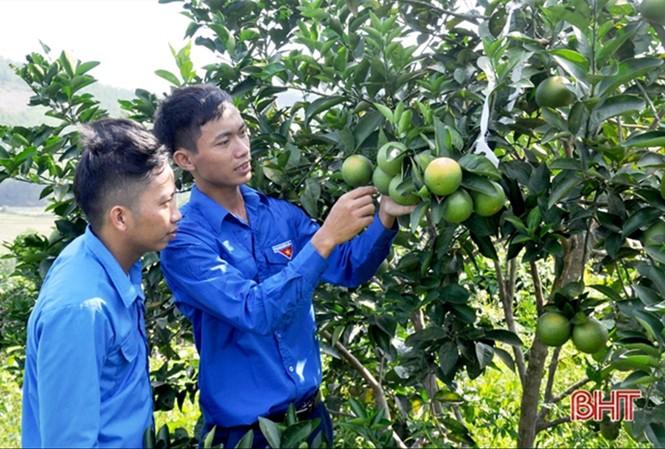 Anh Đoàn Ngọc Bảo (bên phải) giới thiệu về vườn cam đầy tâm huyết của mìnhẢnh: NVCC
