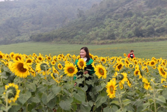 Du khách đến tham quan, chụp ảnh tại cánh đồng hoa Hướng dương