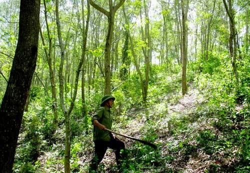 Khánh Hòa: Bảo vệ rừng bắn người