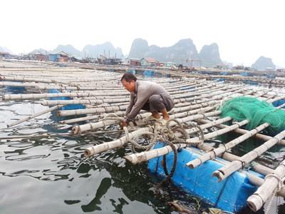 Bão số 2 ảnh hưởng trực tiếp Quảng Ninh - Nam Định