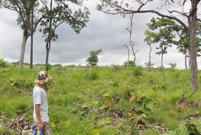 Đất do Ban QLRPH Ia Puch được UBND huyện Chư Prông cấp cho ông Nguyễn Văn Ngọc