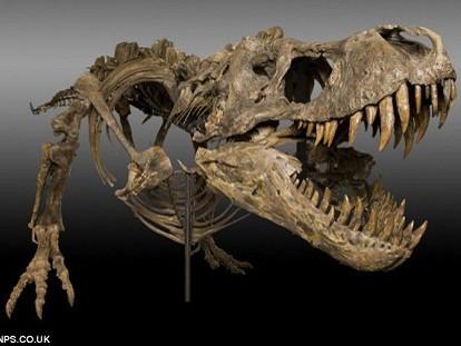 Cày ruộng, phát hiện bộ xương khủng long nguyên vẹn