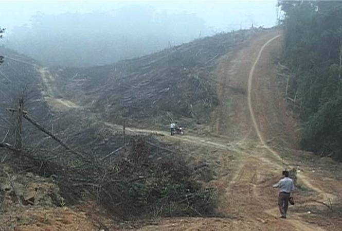 Trưởng phòng quản lý bảo vệ rừng bị hành hung tại nơi làm việc