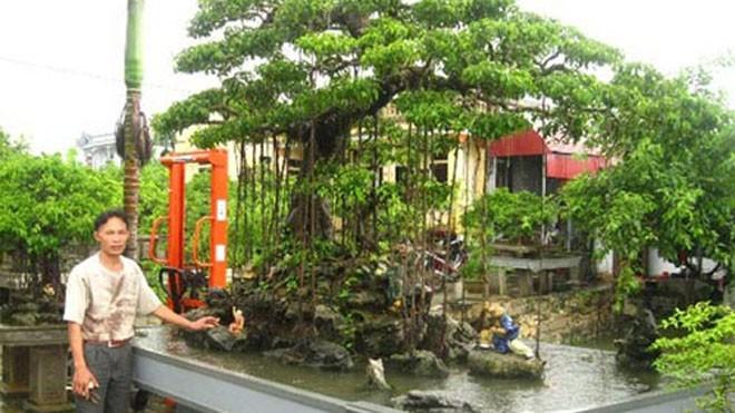 Nghệ nhân Bùi Thanh Khiết bên cây sanh cảnh trị giá trên 500 triệu đồng của gia đình.