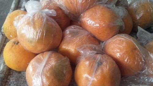 Tất cả số cam đều còn tươi nguyên, người dân nghi ngờ số hàng này bị tẩm hóa chất bảo quản nên mới không bị thối rữa. Ảnh: Hoàng Lê.