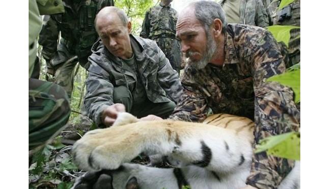 Hồi tháng 5, Tổng thống Nga Putin thả con hổ con 19 tháng tuổi ở vùng Amur. Ảnh: AP