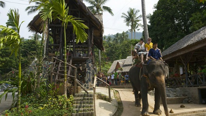 Voi bị bạo hành quật chết du khách ở Thái Lan