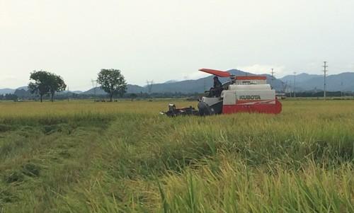 Máy gặt lúa hoạt động tại địa bàn xã Bắc Thành, huyện Yên Thành (Nghệ An).