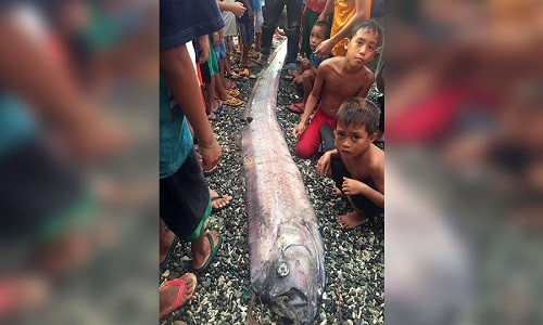 Xác cá oarfish mới nhất dạt vào bờ biển Philippines. Ảnh: Facebook.